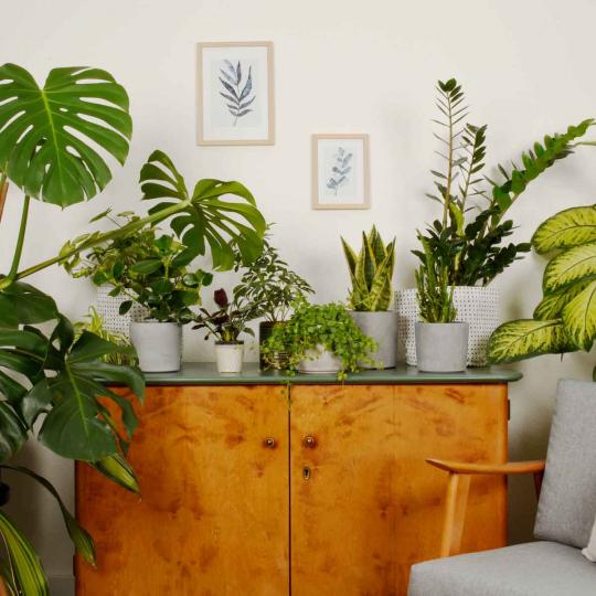 fattori di stress per le piante