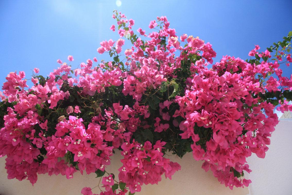 piante da balcone soleggiato