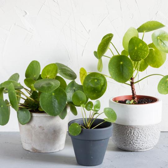 moltiplicare piante per talea