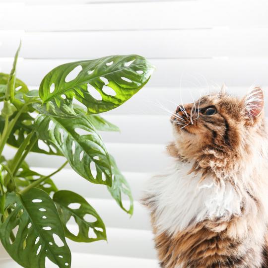 piante innocue per gatti e cani