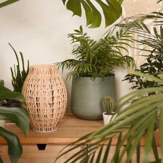 piante principianti