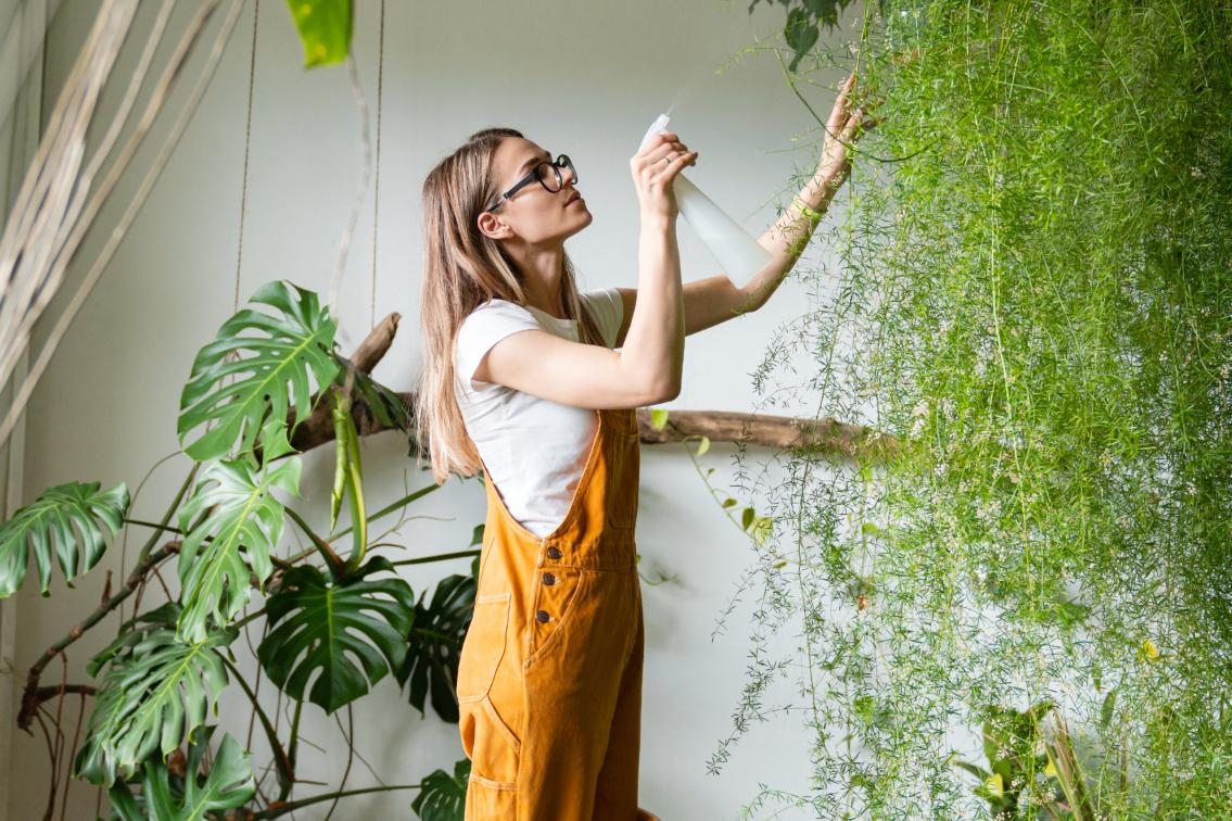 pulizia foglie piante appartamento